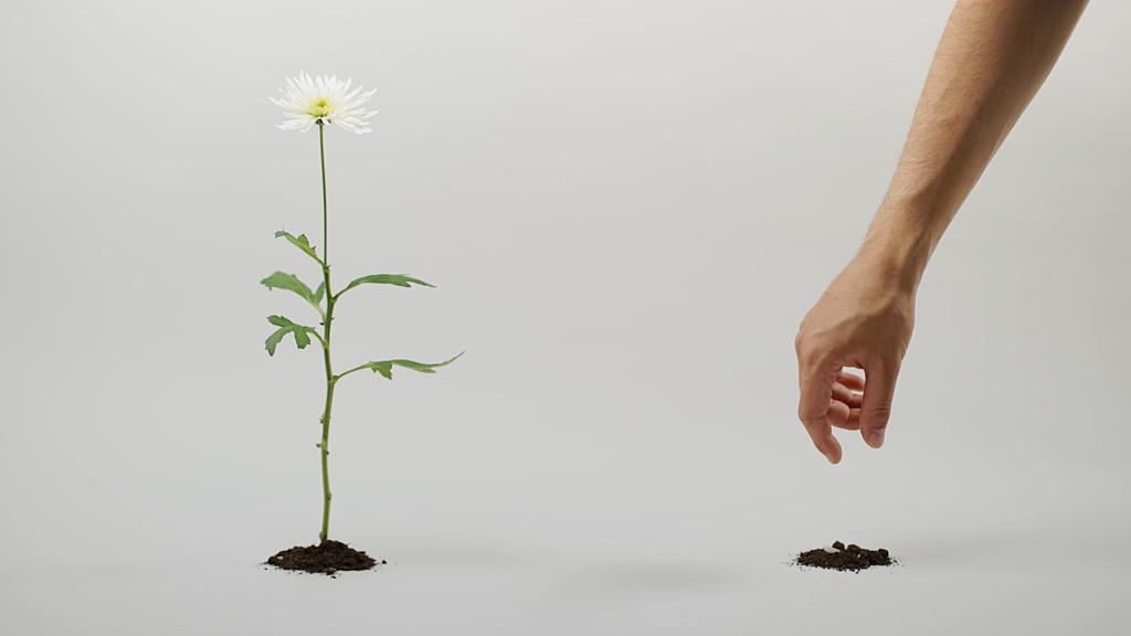 plantera en blomma